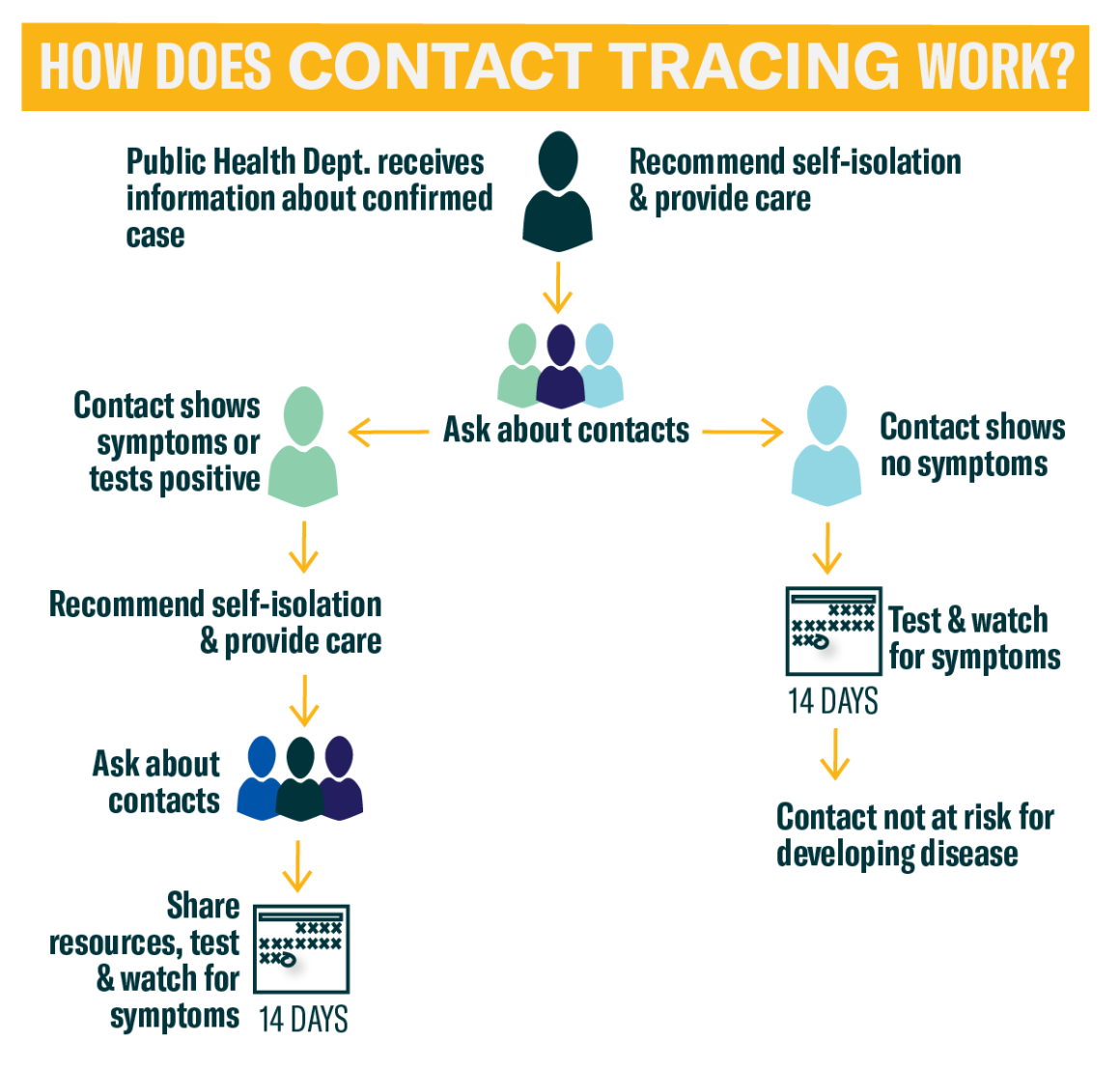 Contact Tracing Process